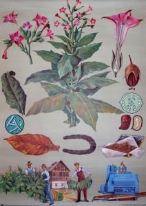 oude schoolplaat tabak 1965