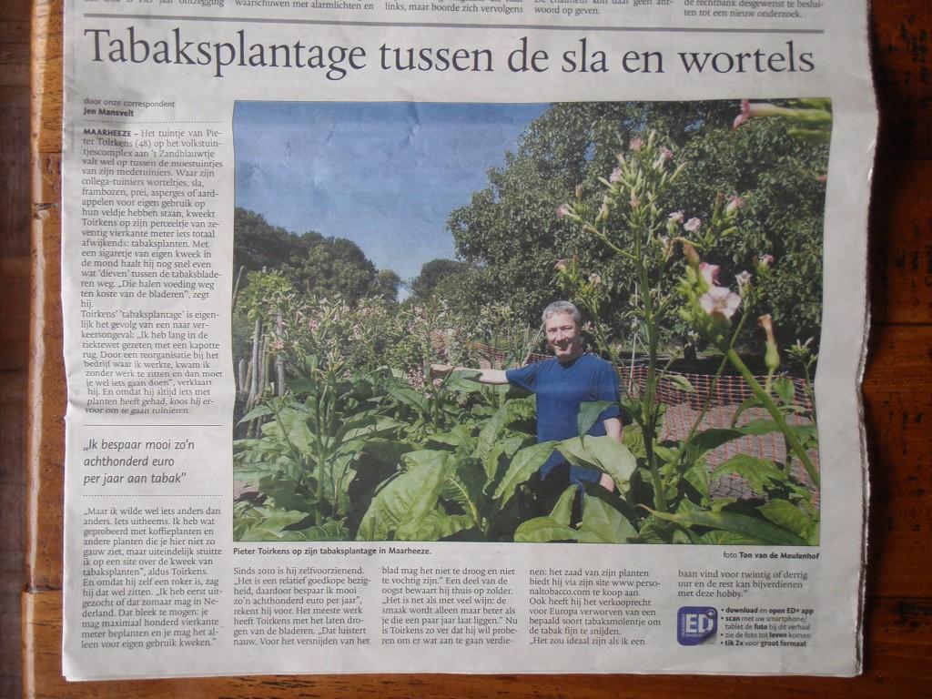 Eindhovens Dagblad Tabaksplantage tussen de sla en wortels